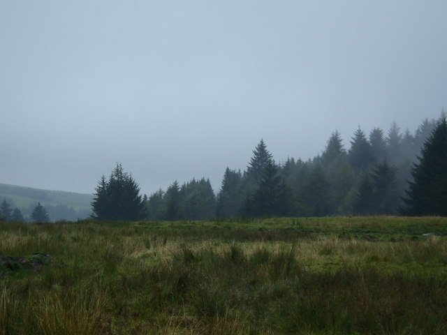 Rough pasture beside Ae Forest