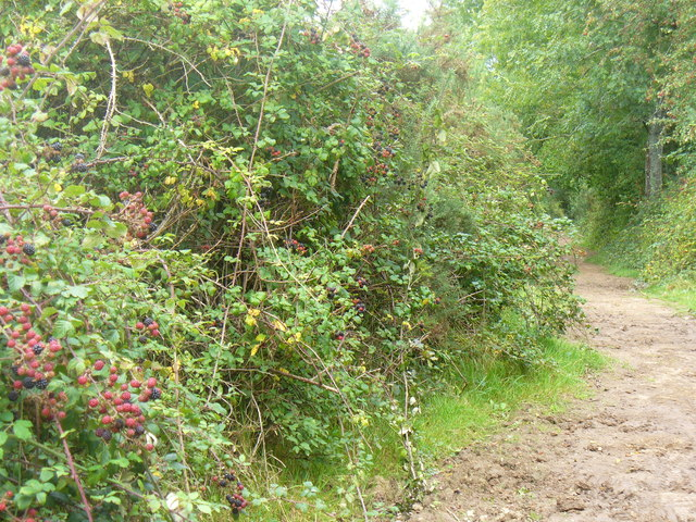 Wey-South Path, Southlands