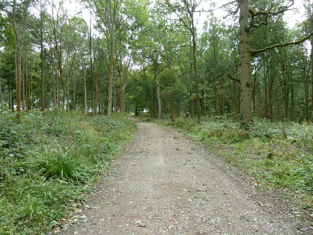 Southam Wood on the path to South Common