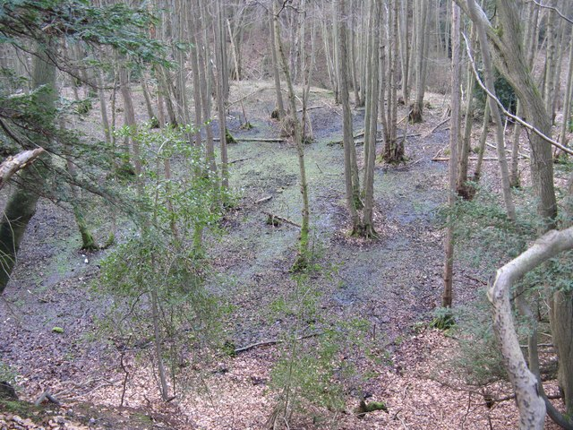 Boggy area at the head of the stream east of Gibbet Hill