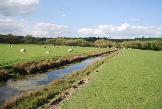 Sheep and ditch in the Brede Valley