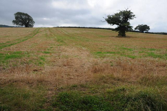 Field beside Moor Lane