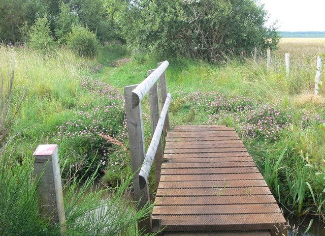 Small bridge and stream in Newborough Forest