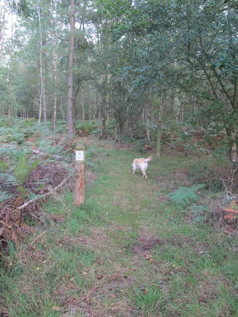 Public footpath into the Woodland trust's Hammond's Copse