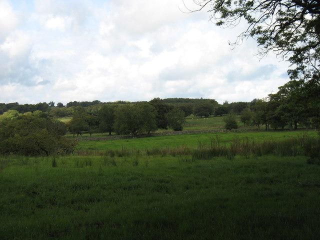 Fields at Low Murrah