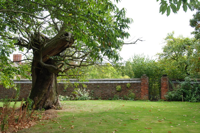 Old Sweet Chestnut Tree, Moseley Old Hall, Staffordshire