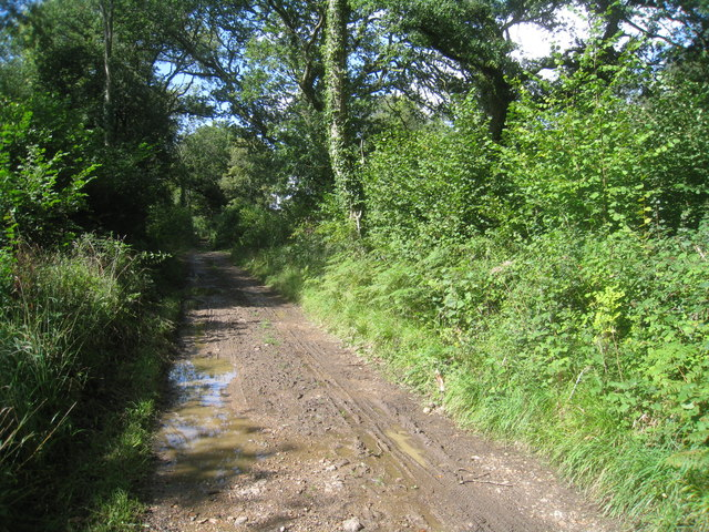 Byway in Leybushes Copse