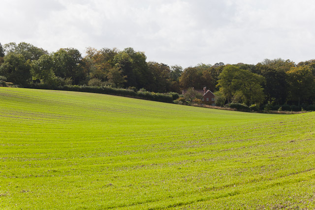 Looking across a field at Orchard House, Morestead