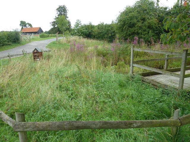 COAM 14: meadow flowers