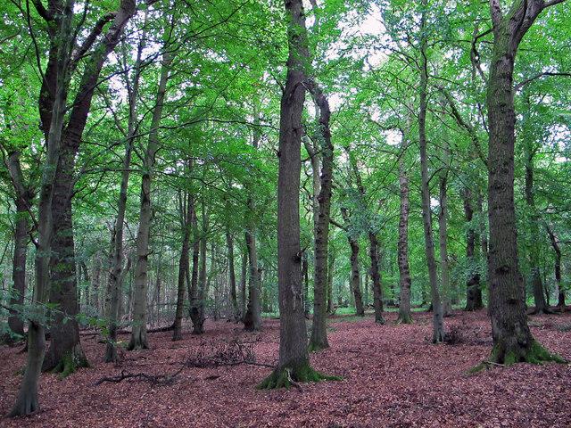 Flisk Wood