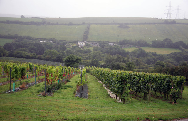 The Camel Valley vineyard on a wet day