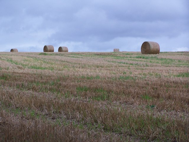 Harvested bales in field near Pitt Down