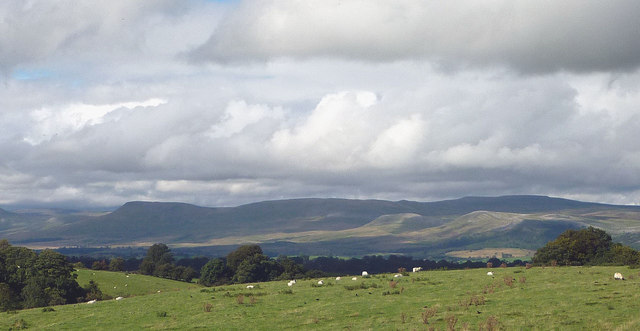 Sheep grazing near the old railway, Kirkby Stephen