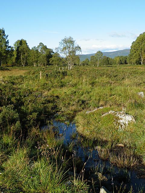 Boggy Ground (west)