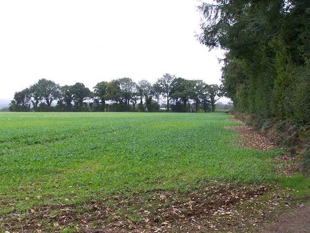 Edge of woods near Farley Farm