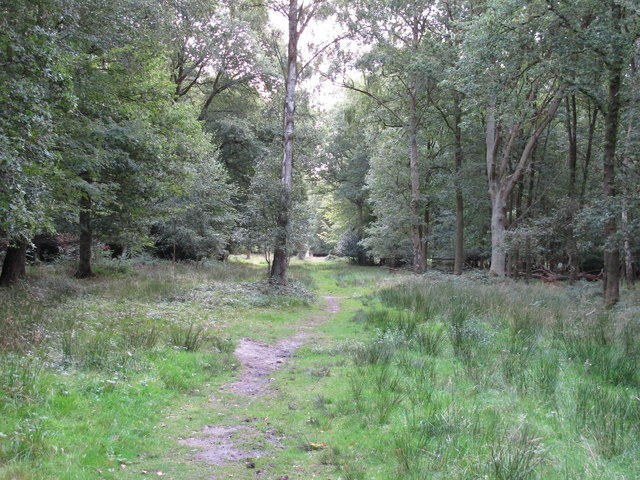 Path in Lower Forest