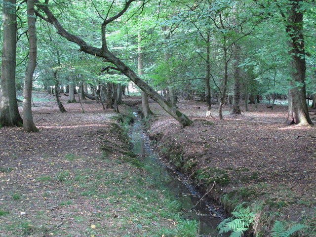 Stream in Wintry Wood