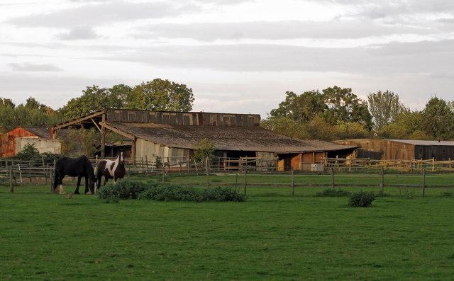 Paddock, Horses, Farm Buildings