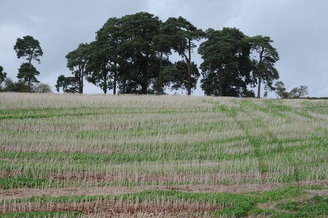 Stubble field near Tyntesfield