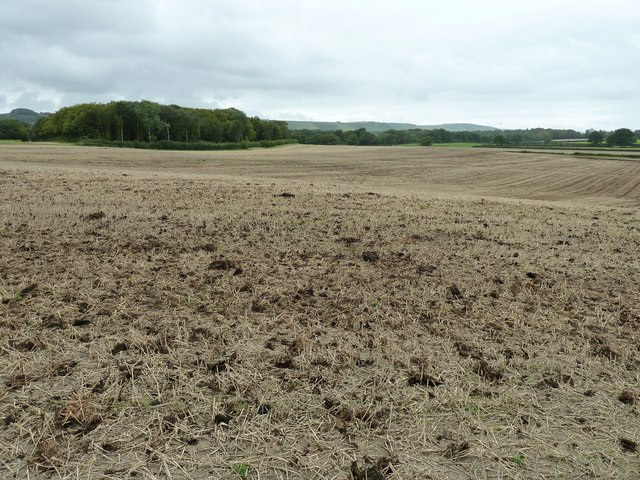 Stubble field with a dressing of 'fresh' manure