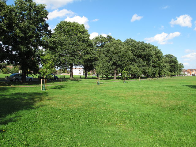 Avenue of Oaks across Theydon Green