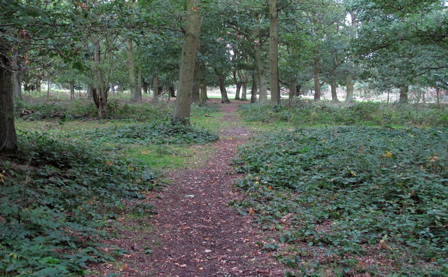 Path from Epping Plain to Wintry Wood Smallholding