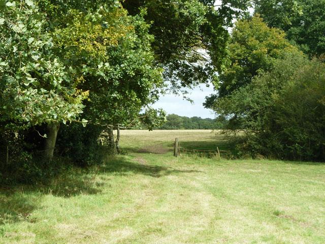 Way between fields