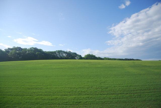 Shelley's Wood across an arable field