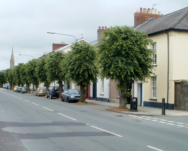 Tree-lined section of Watton, Brecon
