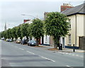 SO0428 : Tree-lined section of Watton, Brecon by Jaggery