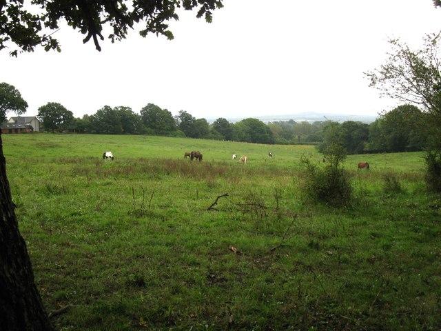 Horses near Old Park Lane