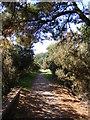 TM2950 : Fynn Valley Walk by Adrian Cable
