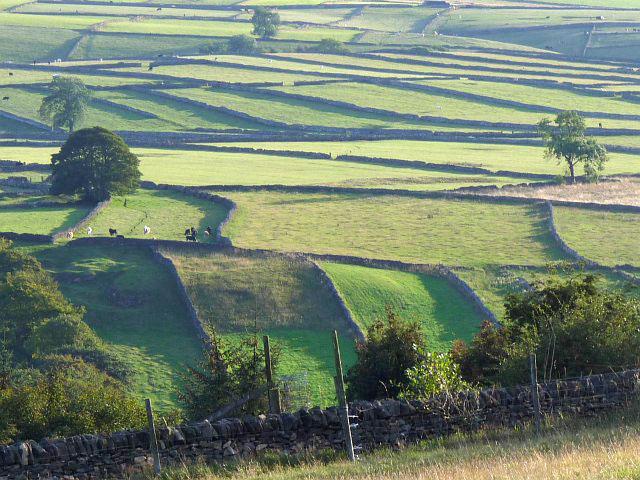 Fields near Eyam