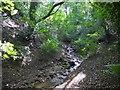 NZ0863 : Otter Burn, Eltringham Wood by Andrew Curtis