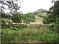 NS7782 : Damp grassland by Richard Webb