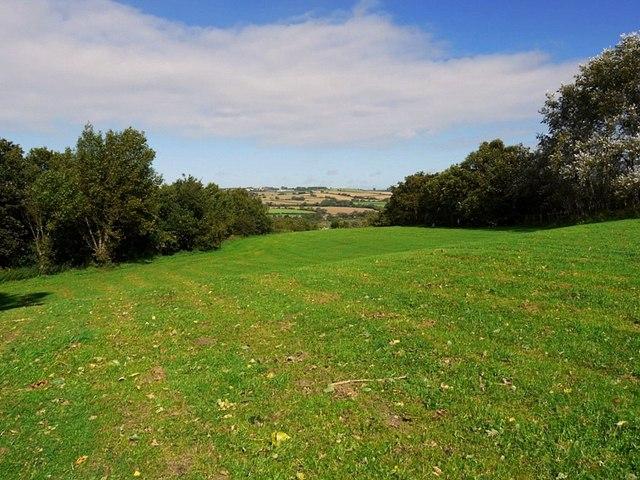 Meadow east of Eltringham Wood