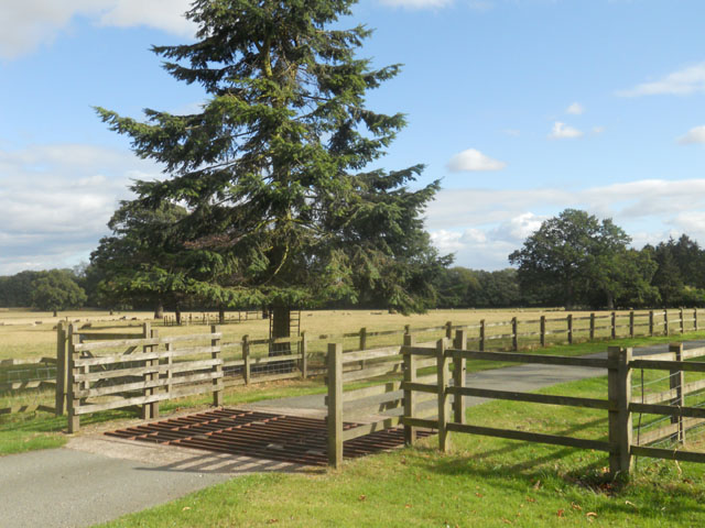 Cattle grid at Stretton Hall