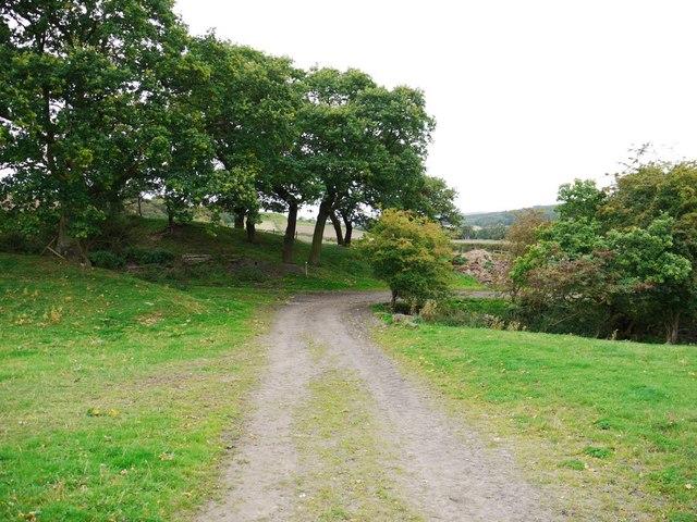 Track west of Eltringham Farm