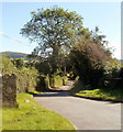 SO2912 : Access road to Grove Farm, Llanfoist by Jaggery