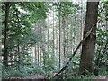 SX8282 : Birch Cleave Wood  by Robin Stott