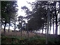 NJ6128 : An impeded footpath near Dunnydeer by Stanley Howe