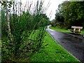 H3563 : Riverside Walk, Dromore by Kenneth  Allen