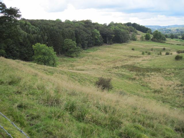 Towards Shadyside Plantation