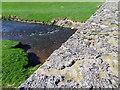 NT8353 : Lichen, Kelloe Bridge by Maigheach-gheal