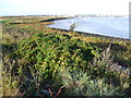 TQ5378 : Early morning on the saltings near Crayford Ness by Marathon