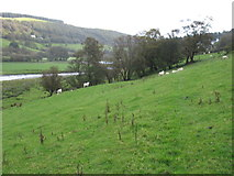 SN8681 : The River Wye (Afon Gwy) seen from the Wye Valley Walk by David Purchase