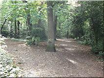 TQ3870 : Path junction in Summerhouse Wood by David Anstiss