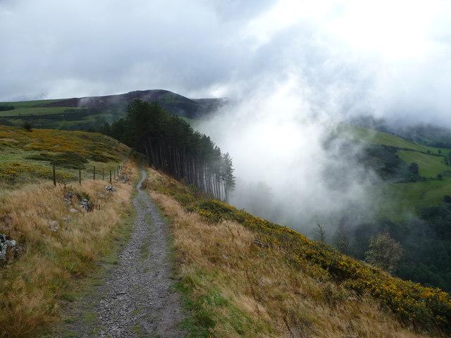 After the rain, Coed Llangwyfan in the Clwydian Hills