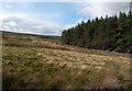 NY9636 : Snapegate Plantation by Trevor Littlewood
