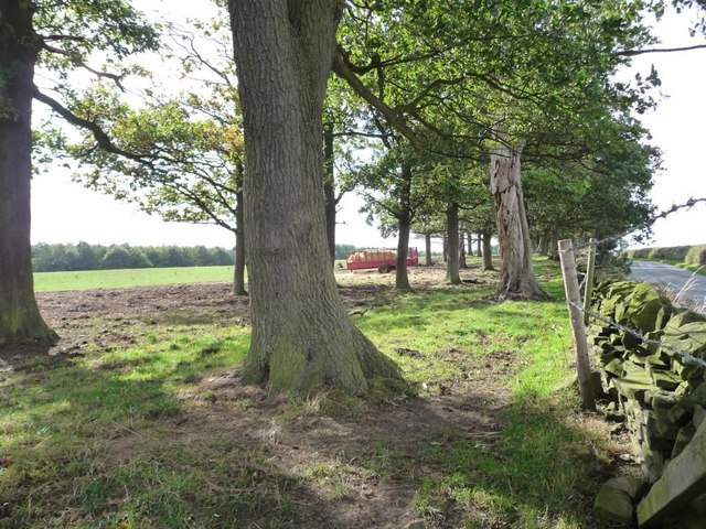 Narrow woodland alongside Upper Field Lane